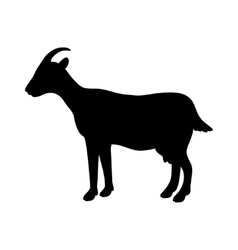 silhouette of goat vector image vector image