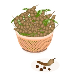 A Brown Basket of Fresh Tamarind Pod and Leaves vector