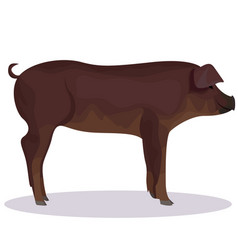 Duroc pig cartoon vector
