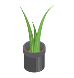 office pot plant icon isometric style vector image