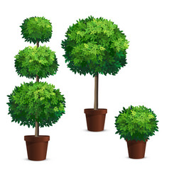 Set of topiary trees in a pots vector