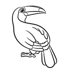 Toucan bird outlined vector image