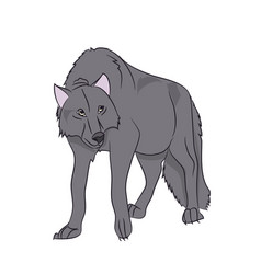 wolf stands color vector image