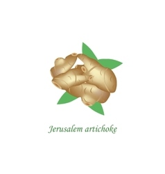 Jerusalem artichoke on vector image vector image