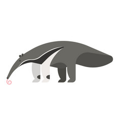 template flat style of anteater vector image