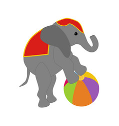 Elephant on the ball in circus vector