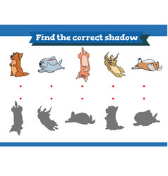 find correct shadow educational game vector image