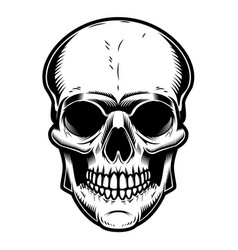 Skull isolated on white background vector