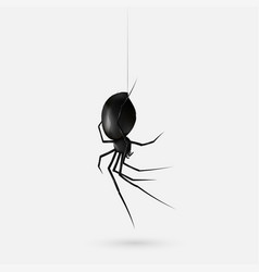 stock realistic black spider vector image