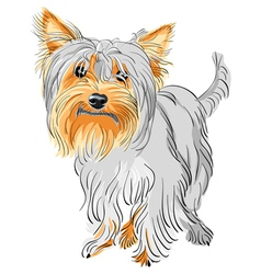 yorkshire terrier sketch vector image