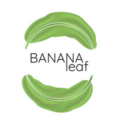 banana green leaf logo vector image