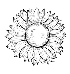 Beautiful black and white sunflower isolated vector