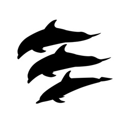 three dolphins vector image