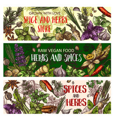 vegan herbs and organic seasoning spices vector image