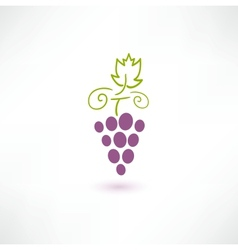 Wine grape vector
