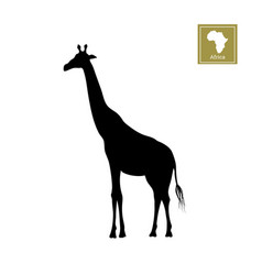 black silhouette of a giraffe on white background vector image vector image
