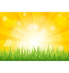 Bright sun effect with green grass field vector image