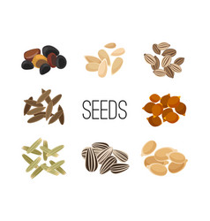 Grains and seeds isolated on white background vector