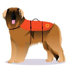 Leonberger lifesaver dog vector