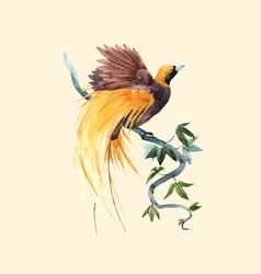 watercolor paradise bird vector image