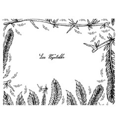 Hand drawn frame of caulerpa taxifoli seaweed vector