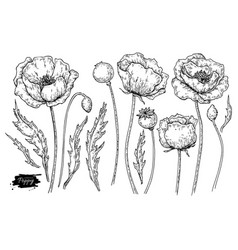 Poppy flower drawing set isolated wild vector