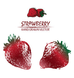 digital detailed color strawberry drawn vector image vector image