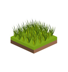 isometric grass design vector image