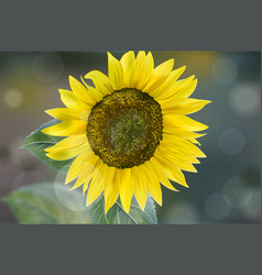 sunflower realistic beautiful growing east vector image