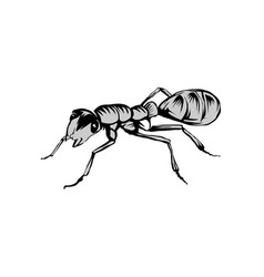 ant image vector image