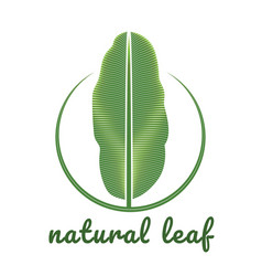 banana natural green leaf logo vector image