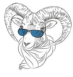 Closeup portrait of funny Alpine ibex vector