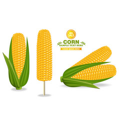 corn harvest detailed label vector image