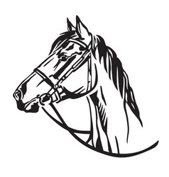 Decorative portrait of horse 3 vector