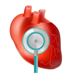 Healthy heart with stethoscope use for heart vector