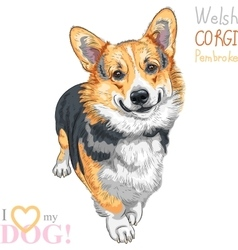 sketch dog Pembroke Welsh corgi smiling vector image vector image