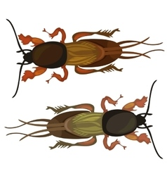 Two cockroach on white background insect vector image