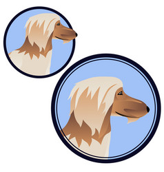 Afghan hound head in circle vector