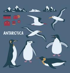 Antarctica themed set with penguins albatross vector
