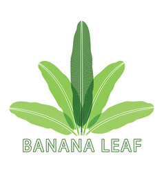 banana nature green leaf logo vector image