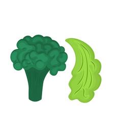 broccoli and leaf lettuce fresh cartoon vector image