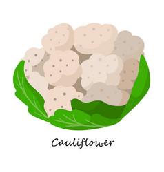 Cauliflower iconcartoon icon vector