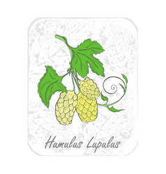 Colored herbal plant hop on textured substrate vector