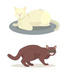 different cat cute kitty pet cartoon cute animal vector image