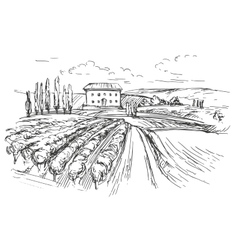 Vineyard hand drawn realistic vector