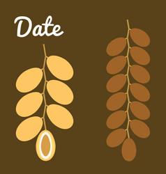 dates fruit vector image vector image