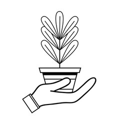 line plant with leaves inside flowerpot design in vector image