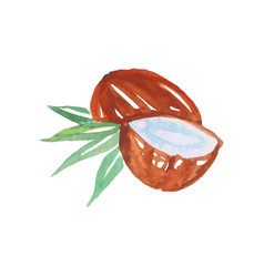 Whole and half of coconut made in the original vector