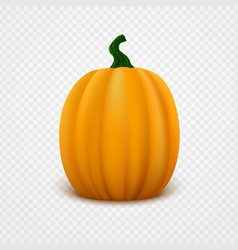fresh orange pumpkin vector image