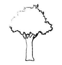 Natural tree foliage branch trunk sketch vector